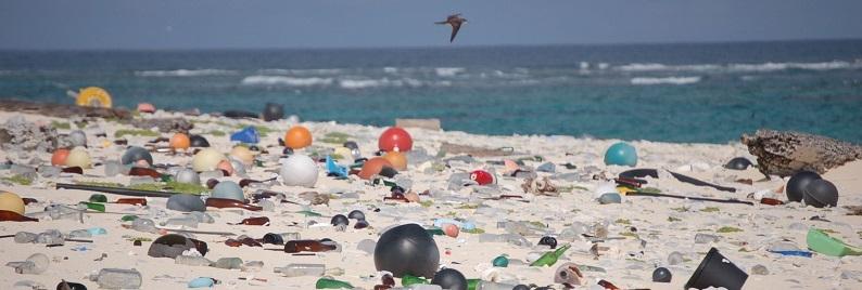 marine-litter-crop